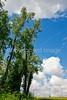 Bayou & fields riding north of Kaskaskia, Illinois, along Mississippi River-0086 - 72 ppi