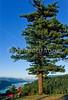 Tourer in Columbia Gorge east of Portland, Oregon - 4 - 72 ppi