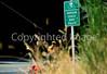 Tourer on Oregon Coast Bike Route on US 101 near Reedsport - 3 - 72 ppi