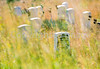 Little Bighorn Battlefield Nat  Monument, Montana - 11 - 72 ppi