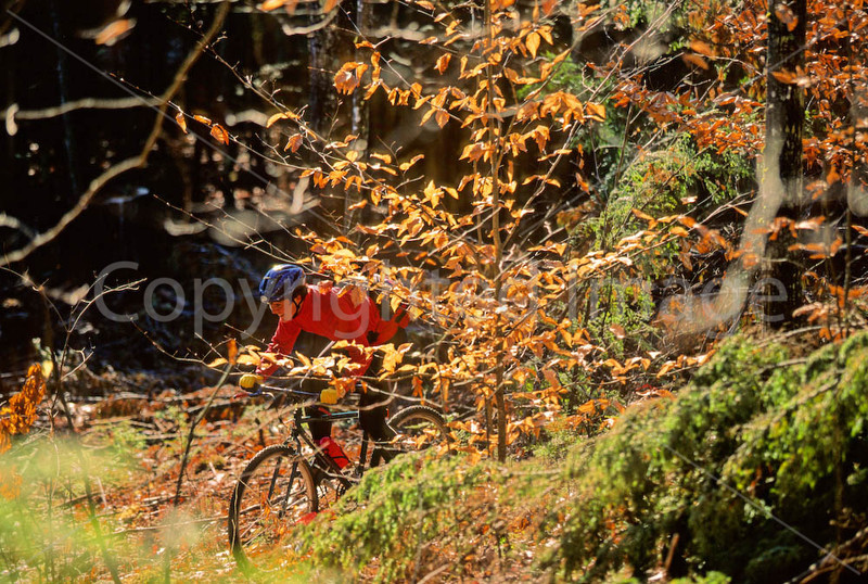 Mountain biker on approach to Bald Pate Mountain in Maine, near New Hampshire border & town of Naples - 72 dpi  - -1