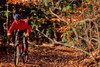 Mountain biker on approach to Bald Pate Mountain in Maine, near New Hampshire border & town of Naples - 72 dpi  - -7