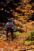 Mountain biker on approach to Bald Pate Mountain in Maine, near New Hampshire border & town of Naples - 72 dpi  - -12