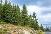 Maine - Acadia - Sojourn - D4-C1-0325 - 72 ppi