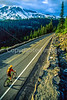 Cyclist in Mount Rainier Nat'l Park, Washington - 1-2 - 72 ppi