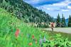 Cyclist in Mount Rainier Nat'l Park, Washington - 9-2 - 72 ppi