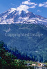Cyclist in Mount Rainier Nat'l Park, Washington - 11-2 - 72 ppi