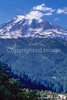 Cyclist in Mount Rainier Nat'l Park, Washington - 15-2 - 72 ppi