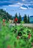 Cyclist in Mount Rainier Nat'l Park, Washington - 19 - 72 ppi