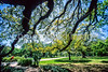 Cyclist in New Orleans' Audubon Park - 3 - 72 ppi