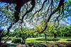 Cyclist in New Orleans' Audubon Park - 3 - 72 ppi