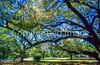 Cyclist in New Orleans' Audubon Park - 9 - 72 ppi