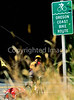 Tourer on Oregon Coast Bike Route on US 101 near Reedsport - 3 - 72 ppi-2