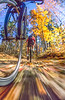 Bike path at Itasca State Park, MN, headwaters of Mississippi River - 2-Edit - 72 ppi