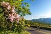 Blue Ridge Bliss-Skyline Drive - D7-C2-0011 - 72 ppi