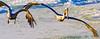 Gulf of Mexico; Bradenton Beach, FL - 72 dpi - sRGB-0071 - 72 ppi-2