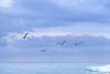 Birds in flight over south Florida beach - 3 - 72 ppi