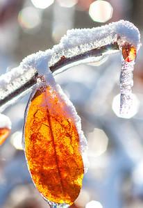 Ice storm - Missouri Botanical Garden - St  Louis-0161 - 72 ppi