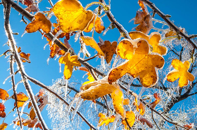 Ice storm - Missouri Botanical Garden - St  Louis-0212 - 72 ppi