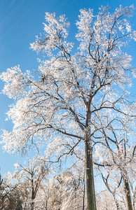 Ice storm - Missouri Botanical Garden - St  Louis-0248 - 72 ppi