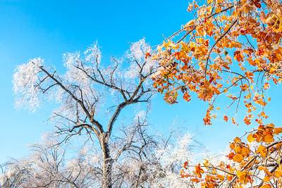 Ice storm - Missouri Botanical Garden - St  Louis-0200 - 72 ppi