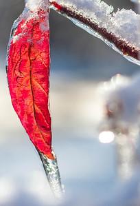 Ice storm - Missouri Botanical Garden - St  Louis-0170 - 72 ppi