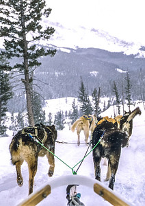Dogsled team near Big Sky, Montana - 5 - 72 ppi