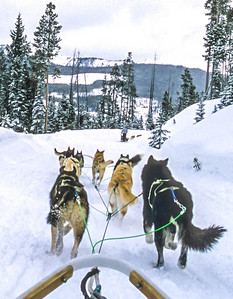 Dogsled team near Big Sky, Montana - 4 - 72 ppi-2