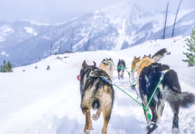 Dogsled team near Big Sky, Montana - 2 - 72 ppi-2