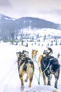 Dogsled team near Big Sky, Montana - 7 - 72 ppi