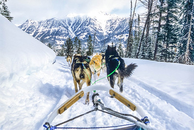 Dogsled team near Big Sky, Montana - 8 - 72 ppi