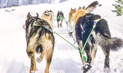 Dogsled team near Big Sky, Montana - 2 - 72 ppi
