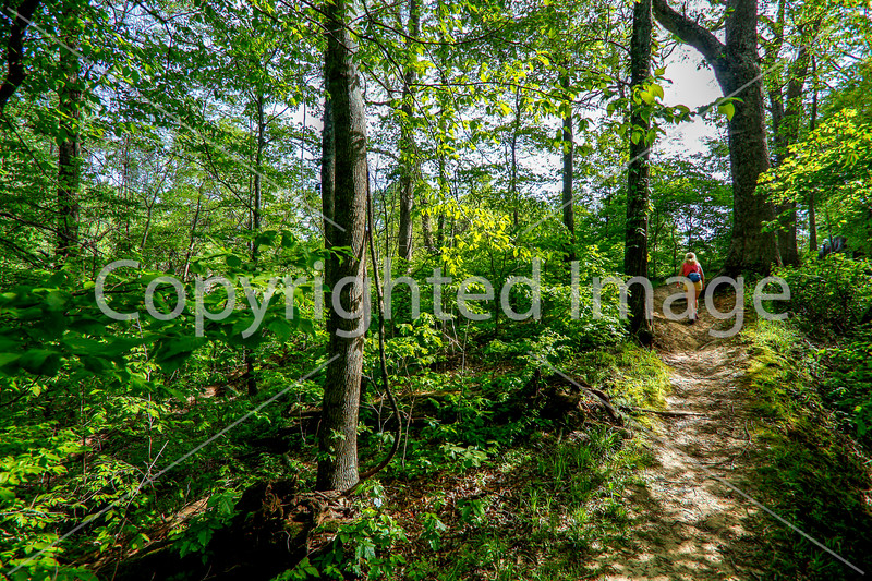 Hiker on way to 1864 battleground at Fort Pillow State Historic Area in Tennessee - 300 dpi - C2 -  -0221