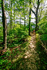 Hiker on way to 1864 battleground at Fort Pillow State Historic Area in Tennessee - 300 dpi - C2 -  -0218
