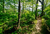Hiker on way to 1864 battleground at Fort Pillow State Historic Area in Tennessee - 300 dpi - C2 -  -0220