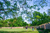 1864 Fort & battleground at Fort Pillow State Historic Area in Tennessee - 300 dpi - C2 -  -0240