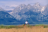 ACA bike tourers in Tetons Nat'l Park, Wyoming - 19 - 72 ppi