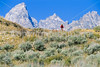 Mountain biker on south end of River Road along Snake River in Wyoming's Grand Teton NP - 5 - 72 ppi