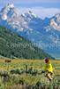 Mountain biker & buffalo in Grand Teton Nat'l Park, Wyoming - 1 - 72 ppi