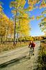 Mountain biker on Two Ocean Lake Road in Grand Teton Nat'l Park - 6 - 72 ppi