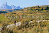 Mountain bikers on Gros Ventre Road in Teton Nat'l Forest just east of Grand Teton Nat'l Park - 16 - 72 ppi