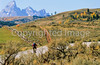 Mountain bikers on Gros Ventre Road in Teton Nat'l Forest just east of Grand Teton Nat'l Park - 16 - 72 ppi-2