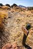Texas -  Views from Davis Mountains State Park -  C8e-'08-2919 - 72 ppi
