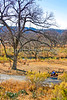Texas Hill Country -  along South Llano River on 100-Mile Loop - 1162 - 72 ppi