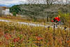Biker on Confederate bank robbers' trail north of Enosburg Falls, VT-C3--0085 - 72 ppi