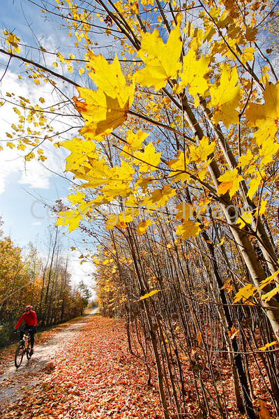 Cyclist(s) on Vermont's Missisquoi Valley Rail Trail - 2 -0227 - 72 ppi
