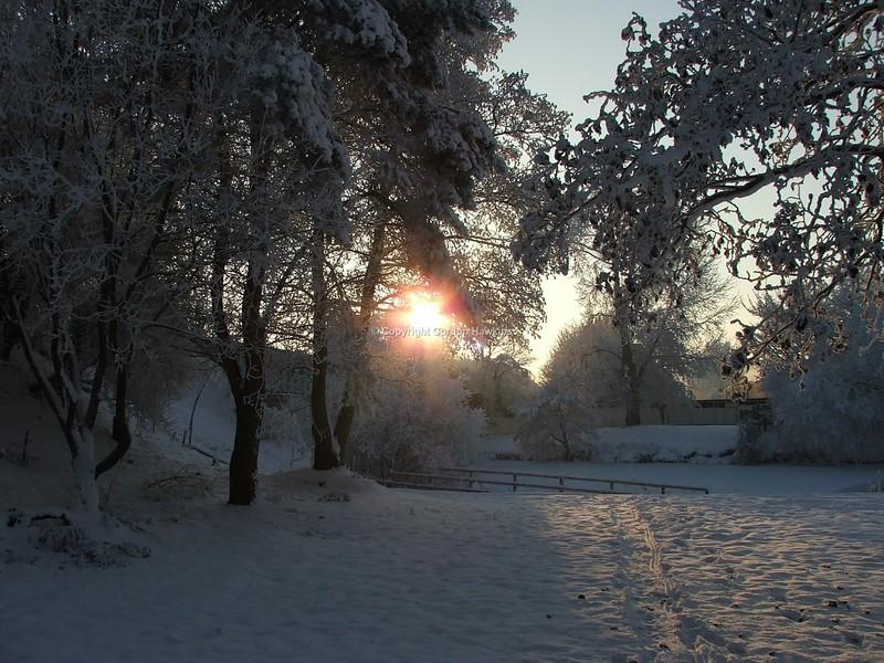22.12.10. Winter Scene at Hoys Meadow Portadown.