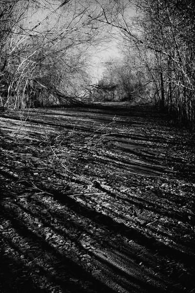 Abandoned Road II