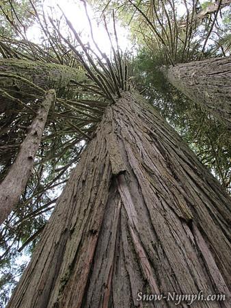 2011 (June 2)  Pt 1:  Grove of the Patriarchs, Mt Rainier NP, WA