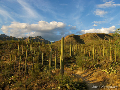 2011 (Oct 25) Bear Canyon to Seven Falls, Santa Catalina Mtns, Tucson, AZ